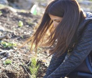 Bäume pflanzen in Israel - mit dem JNF-KKL ein echtes Erlebnis!