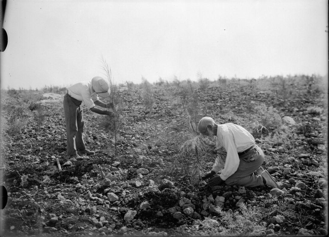 Baumpflanzung im noch kargen Israel
