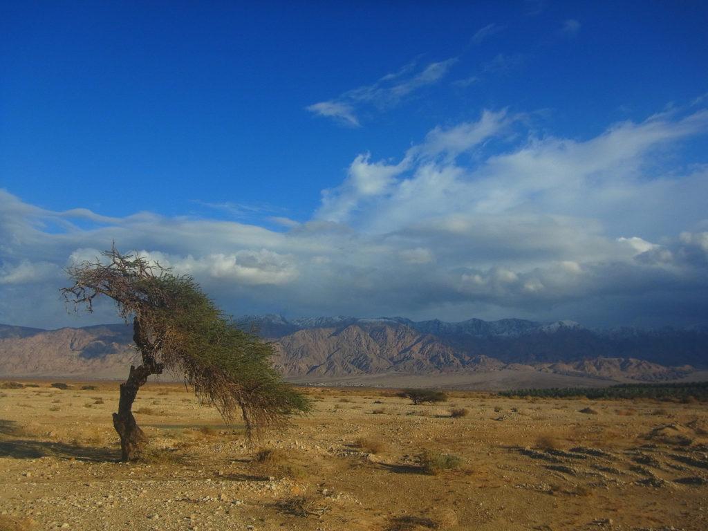 Die Flora in Israel - wie ein Baum in der Wüste