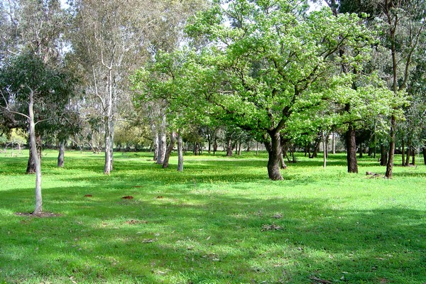 Die Flora in Israel - grüner als man denkt