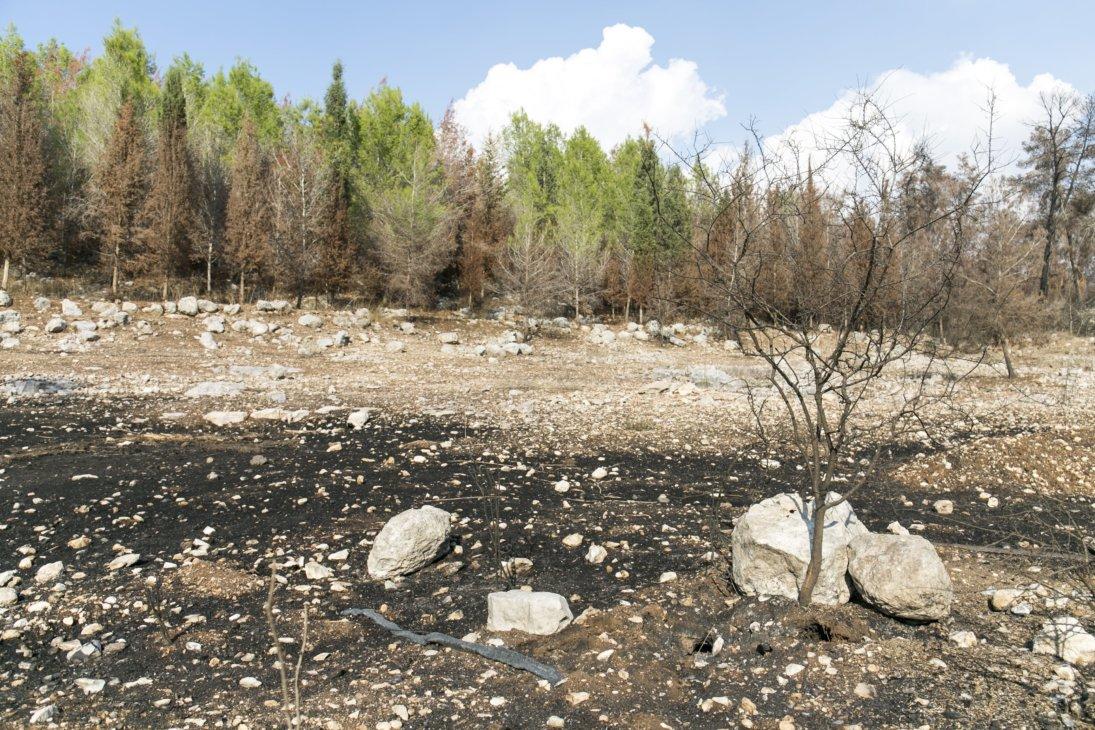Ben Shemen Wald - große Teile abgebrannt