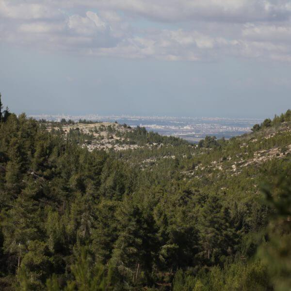 Die grünen Berge Jerusalems