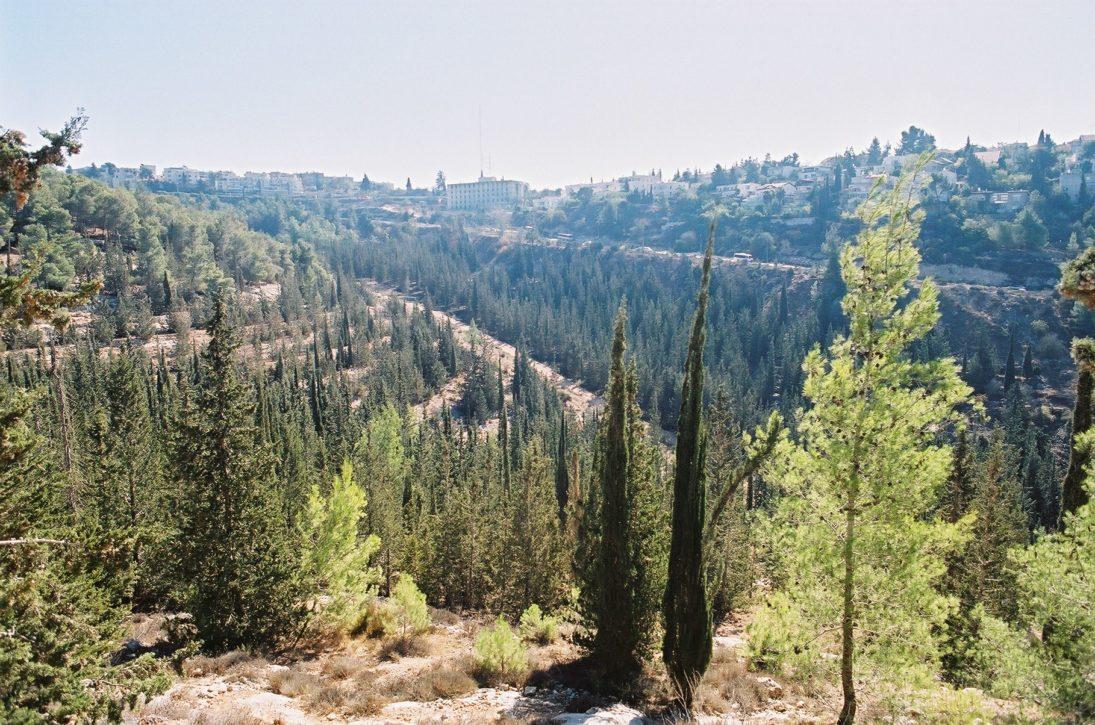 Grünes Juwel: die Berge von Jerusalem
