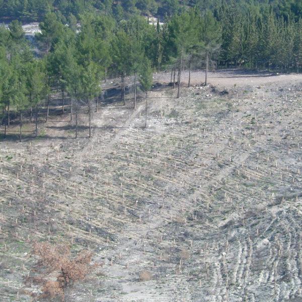 Abgebrannte Flächen in Galiläa