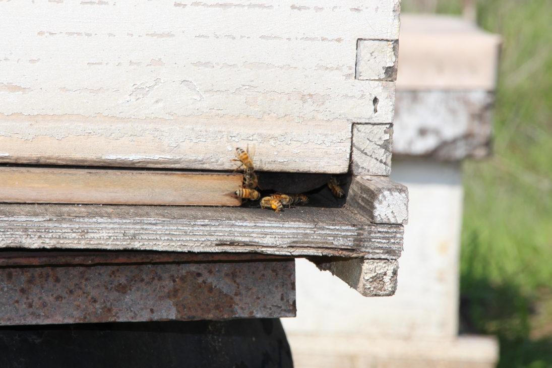 Bienenstöcke im Kibbutz Yad Mordechai