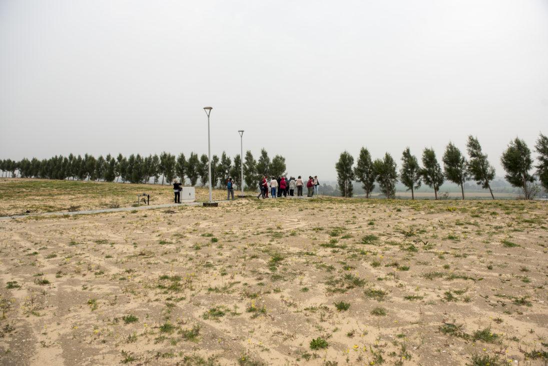Allee von Schutzbäumen bei Gaza