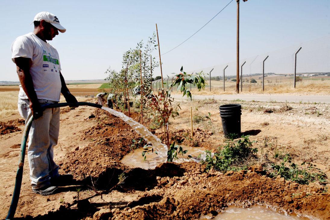 Grenznahe Schutzbaumpflanzung