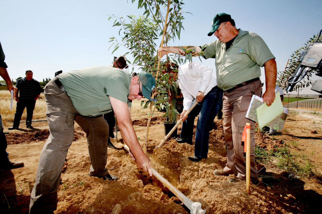 Schutzbäume Pflanzung