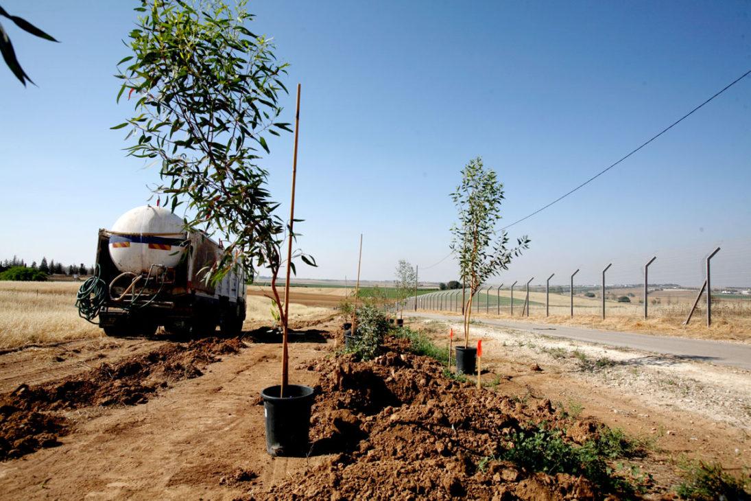 Pflanzung von Schutzbäumen